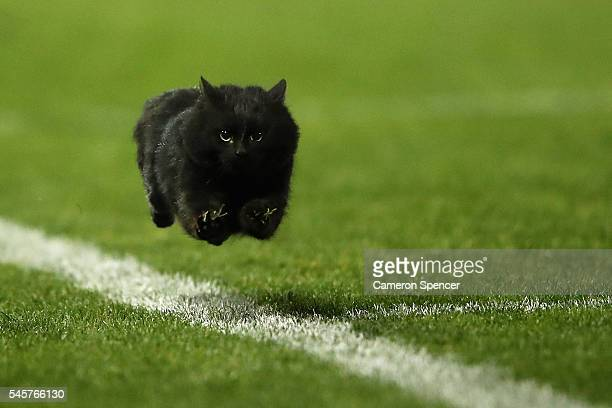 A black cat enters the field of play during the round 18 NRL match between the Penrith Panthers and the Cronulla Sharks at Pepper Stadium on July 10...
