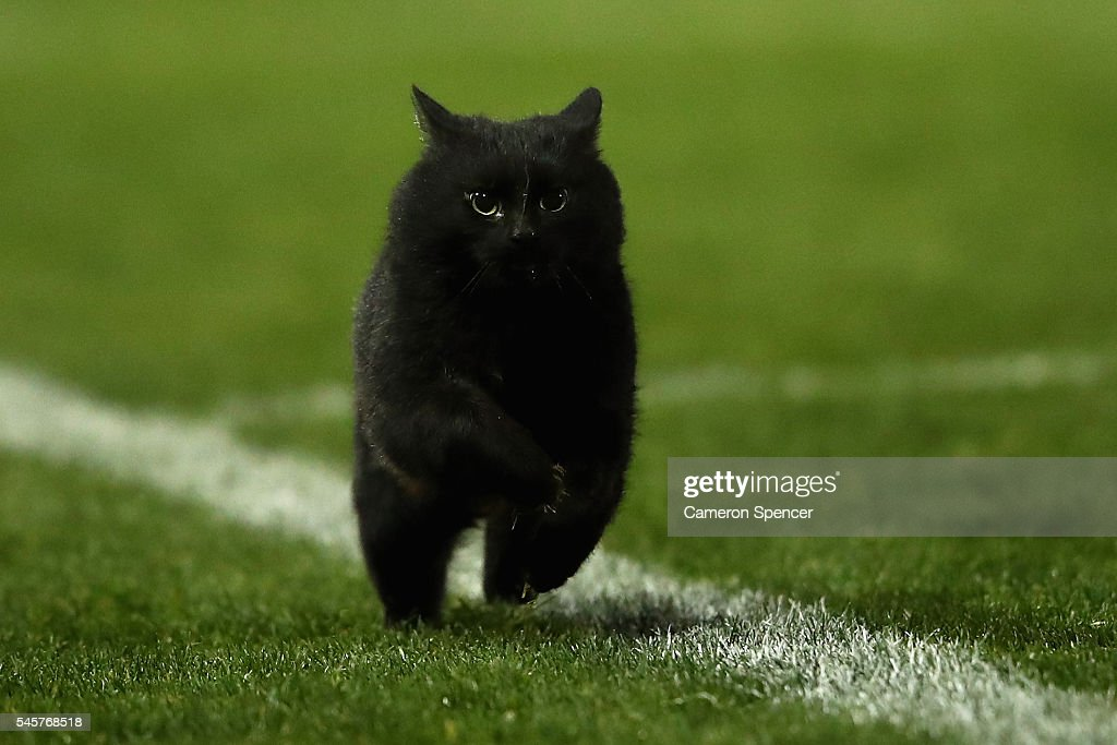 A black cat enters the field of play during the round 18 NRL match between the Penrith Panthers and the Cronulla Sharks at Pepper Stadium on July 10, 2016 in Sydney, Australia.