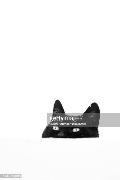 black cat head behind a white wall, santorini, greece - gatto nero foto e immagini stock