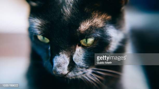 Black cat head.