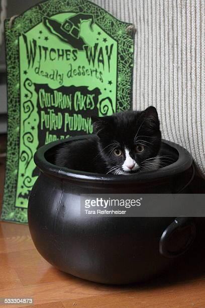 Black Cat in Cauldron