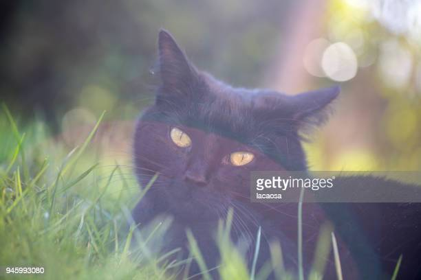 black cat in meadow
