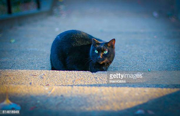 black cat in the winter light - mamigibbs stock photos and pictures