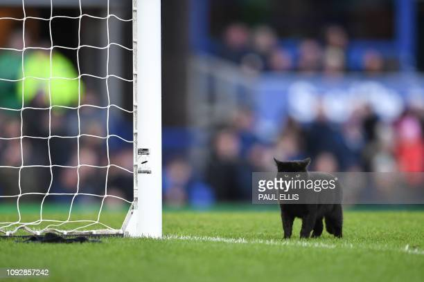 A black cat is seen on the pitch as it stops play during the English Premier League football match between Everton and Wolverhampton Wanderers at...