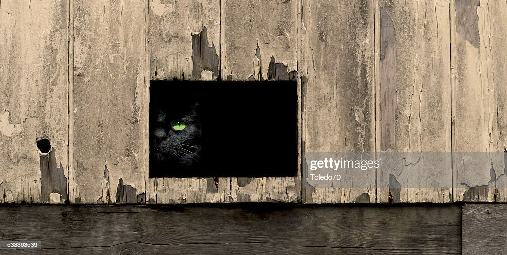 Black cat looking out : Stock Photo