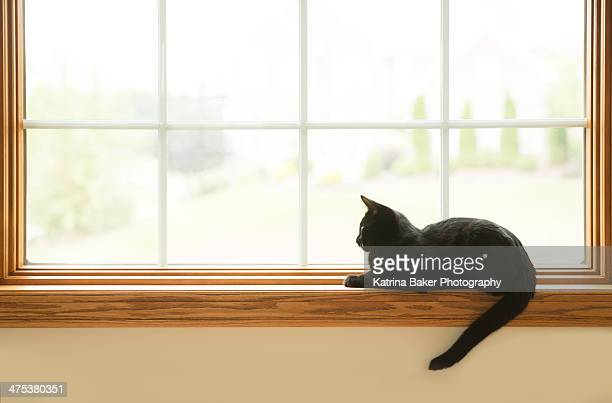 Black Cat Looking Out Window