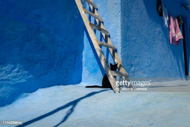 black cat near the old painted wall with wooden handmade ladder in blue city chefchaouen, morocco - bad luck stock pictures, royalty-free photos & images