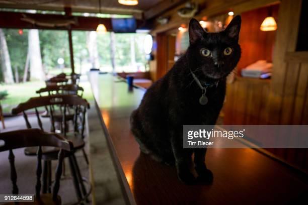 Black Cat on Bar