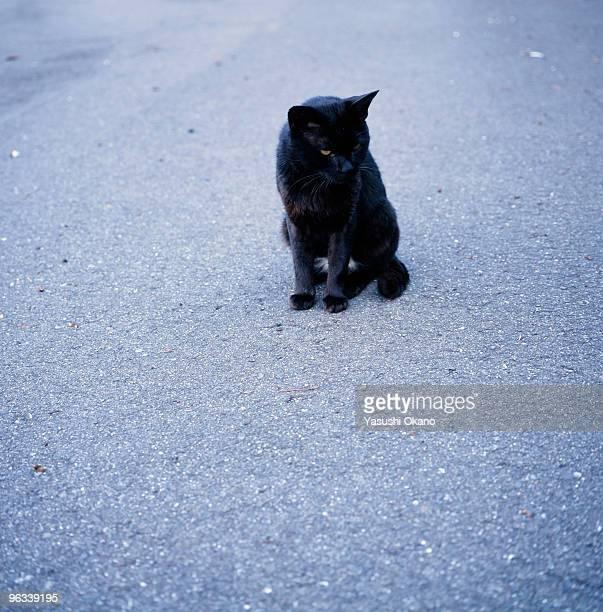 A black cat on the street.