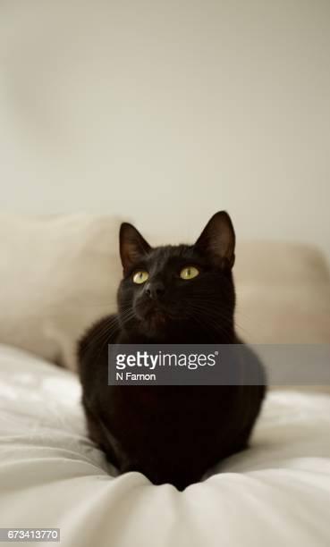 Black Cat on White Bed