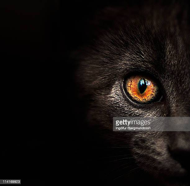 Black Cat, Orange Eye