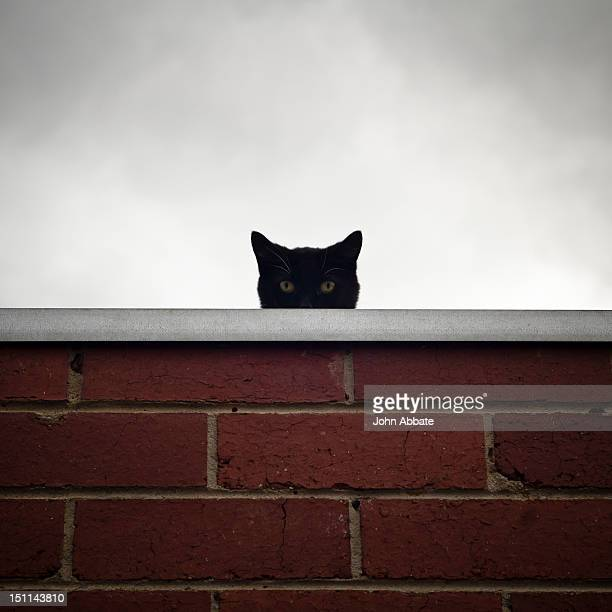 black cat peeking over wall - gatto nero foto e immagini stock