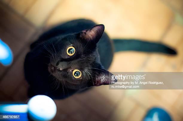 black cat - black cat stock photos and pictures