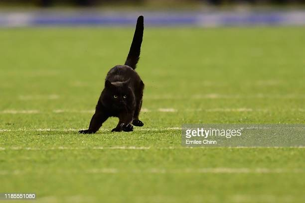 Black cat runs on the field during the second quarter of the New York Giants and Dallas Cowboys game at MetLife Stadium on November 04, 2019 in East...
