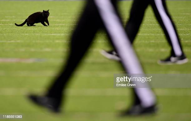 A black cat runs on the field during the second quarter of the New York Giants and Dallas Cowboys game at MetLife Stadium on November 04 2019 in East...