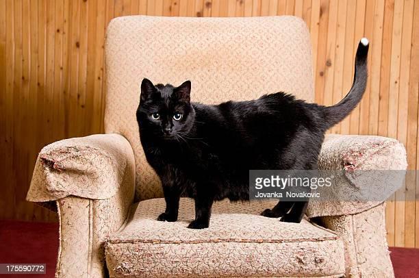 Schwarze Katze kratzen Post