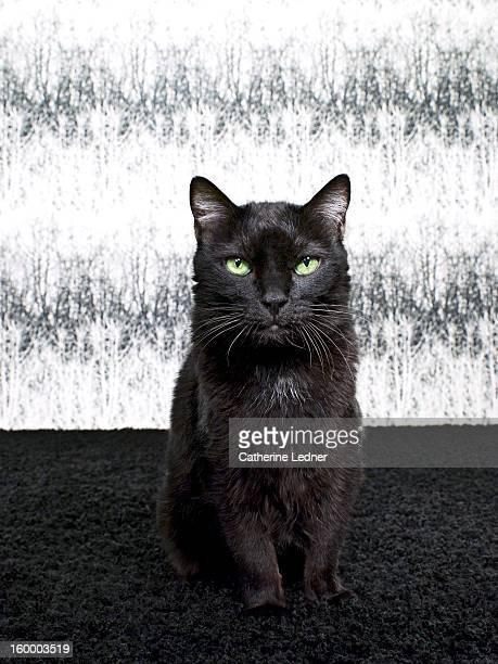 Black Cat Seated on Fancy Set