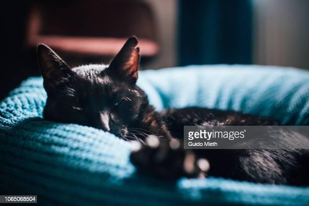 Black cat showing paw.