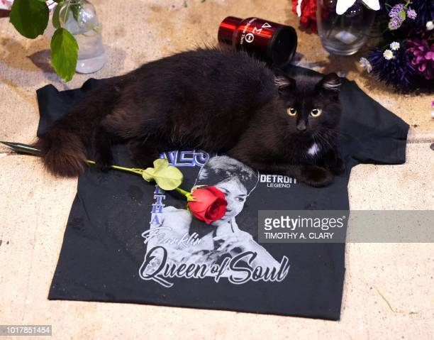 A black cat sits near a rose is placed on a tshirt at a temporary memorial set up for late singer Aretha Franklin at New Bethel Baptist Church in...