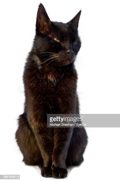 black cat sitting against white background - gatto nero foto e immagini stock