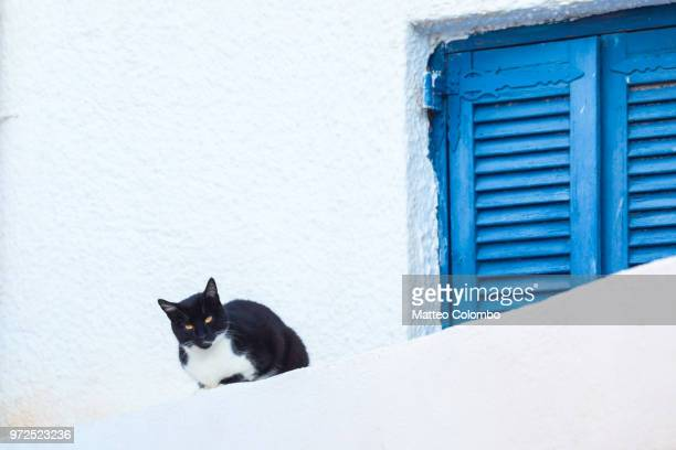 black cat sitting near blue shutter window, santorini, greece - whitewashed stock photos and pictures