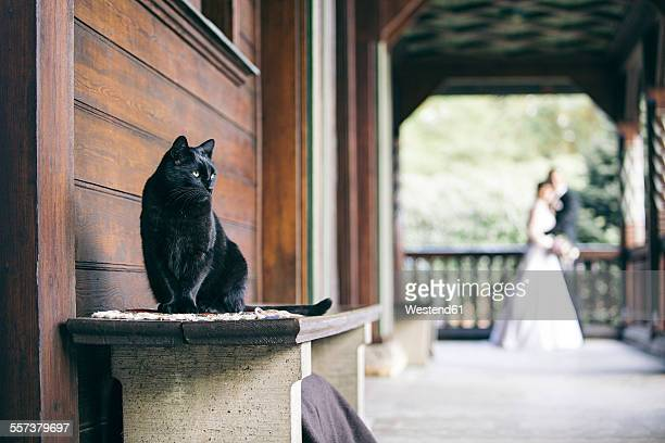 Black cat sitting on bench while bridal couple in the background watching