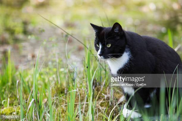 black cat sitting on grassy field - eye black stock photos and pictures