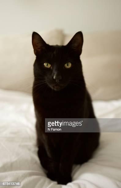 Black Cat Sitting on White Bed