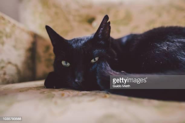 Black cat sleeping on a sofa.