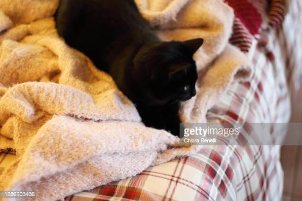 black cat sleeps on the bed with winter blankets - florence douillet photos et images de collection