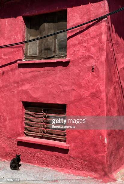 black cat standing in front of a maroon house. - emreturanphoto stock-fotos und bilder