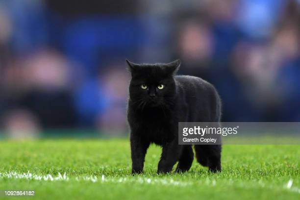 A black cat that ran onto the pitch looks on during the Premier League match between Everton FC and Wolverhampton Wanderers at Goodison Park on...