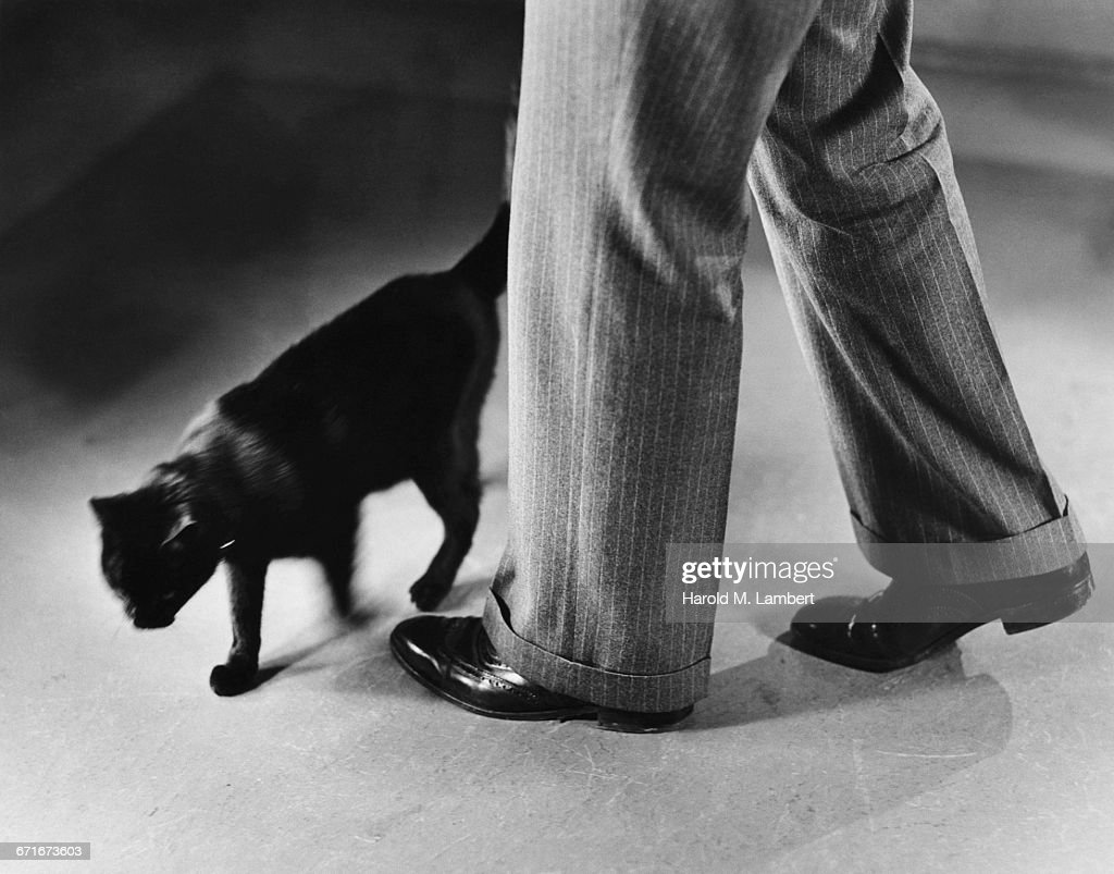 Black Cat Walking Around ManS Legs : Stock-Foto