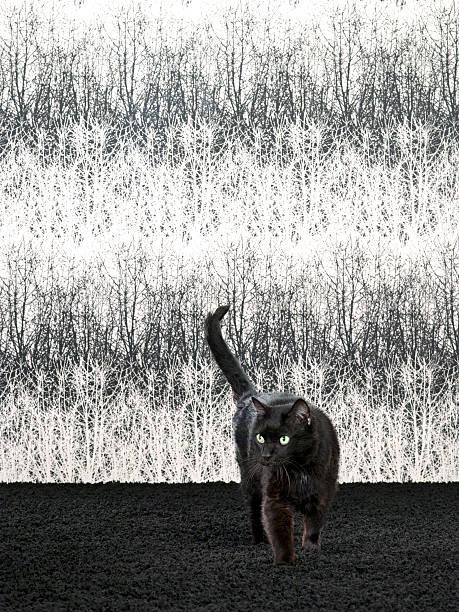 Black Cat Walking on Fancy Set