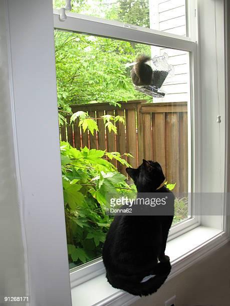 Black Cat Watching Squirrel at Bird Feeder