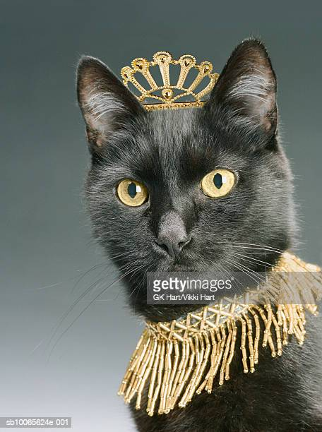 Black cat wearing gold crown and necklace, close-up