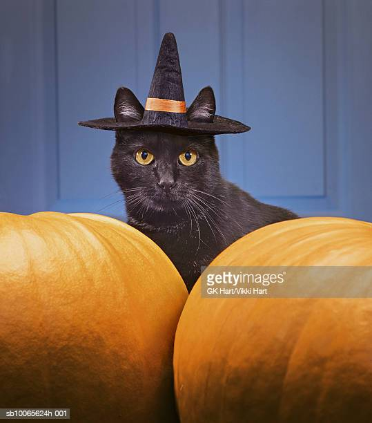 Black cat wearing witch's hat amongst pumpkins