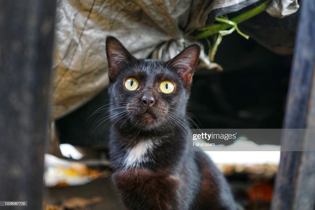 Black Cat With Big Eyes Stock Photo - Getty Images