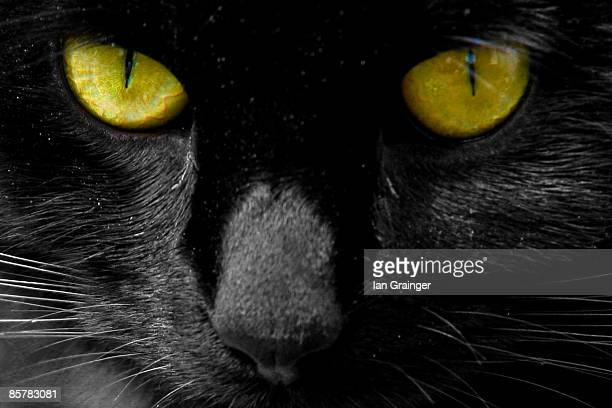 Black cat with green eyes, close-up