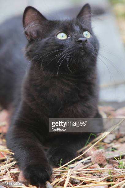 Black cat with green eyes in Toronto, Ontario, Canada.