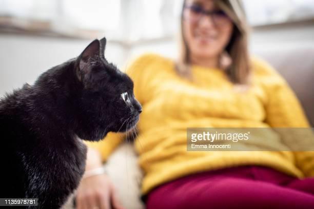 black cat with its owner - florence douillet photos et images de collection