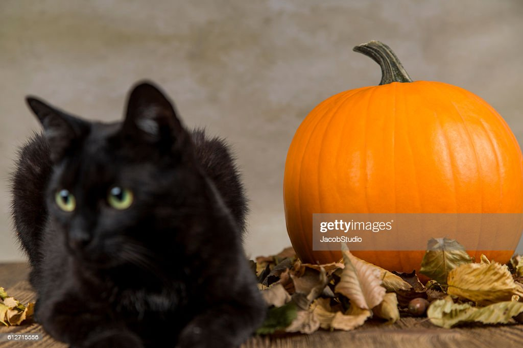 Black Cat With Pumpkin As A Symbol Of Halloween Stock Photo Getty