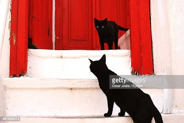 Black Cats On Steps Against Closed Door