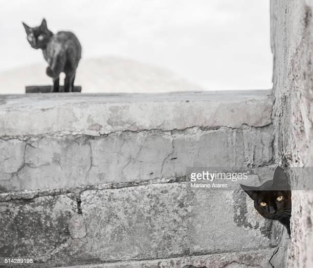 black cats - blanco y negro stock-fotos und bilder