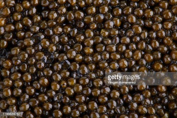 black caviar background. full frame shot of black caviar texture as a background - named animal ストックフォトと画像
