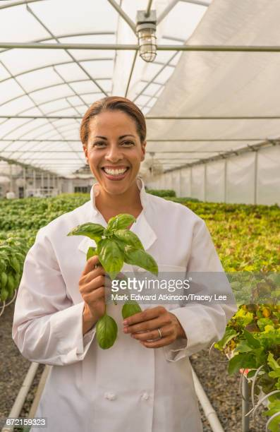 Black chef holding basil leaves in greenhouse