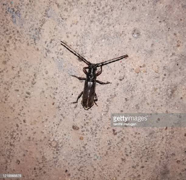 black click beetle in floor - toxic substance stock pictures, royalty-free photos & images