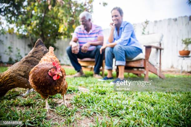 black couple playing in yard with chickens - hen stock pictures, royalty-free photos & images