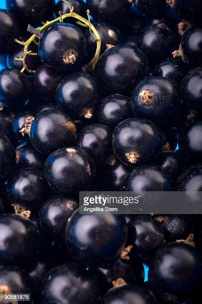 black currant - johannisbeere stock-fotos und bilder