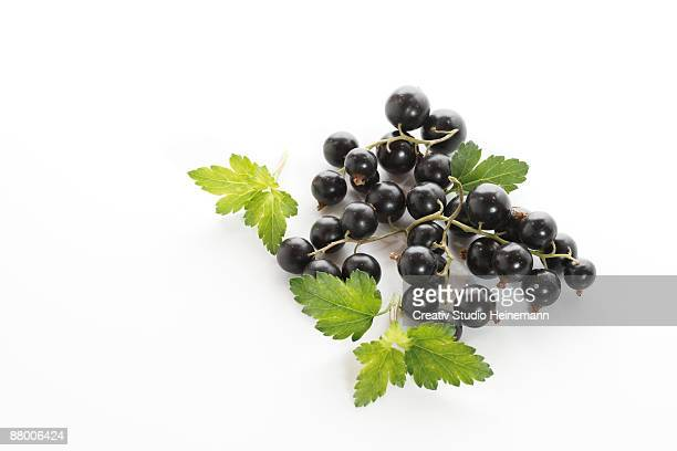 Black Currants with leaves, elevated view